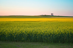 Rural Landmark (Arkadaslik Yachting) Tags: blue sky green yellow rural landscape nikon farm silo alberta silos prairie nikkor canola 1855mmf3556gvr d5100