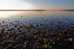 THE SHORELINE (6) (DESPITE STRAIGHT LINES) Tags: sea canada beach water sunrise nikon rocks bc sidney d700 sidneybythesea ilobsterit