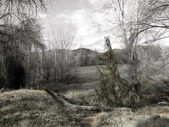 IMG_0797 (ellenm1) Tags: arizona nature landscape sedona desaturated redrockstatepark