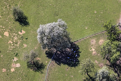 Shady Rest (Aerial Photography) Tags: tree animal by spring aerial pa baum cherrytree tier fruittree frhling luftbild treeblossom baumblte luftaufnahme kirschblte obstbaum kirschbaum blhen ndb damwild ortenburg fotoklausleidorfwwwleidorfde 25042012 1ds76287