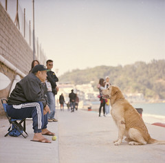 wait for play (Jen Son) Tags: dog pet 6x6 mediumformat hongkong kodak 120film negative 160vc portra    streetsnap
