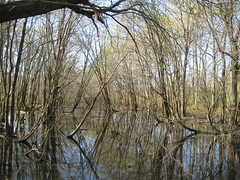 Swamp (TheTurducken) Tags: peelerpark