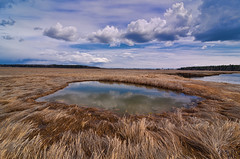 Scarborough Marsh 6828 (Cindy Farr-Weinfeld) Tags: sky water clouds coast tide maine coastal scarborough tidal nikcolorefexpro scarboroughmarsh topazadjust nikdfine20 reflectionslovers flickrstruereflection1