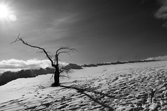 Desolate (_David_Meister_) Tags: shadow sun white black tree germany deutschland sw desolate sonne schatten baum wasserkuppe trostlos davidmeister