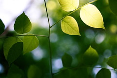FOLIAGE // (La Branĉaro) Tags: greenleaves plants sunlight slr film leaves forest austin 1 spring branch texas dof kodak bokeh branches olympus foliage om 160vc om1 zilker shallowdepthoffield portra160vc zilkerbotanicalgarden zilkergarden springcolor leafcanopy 50mmf35macro zuikomacro
