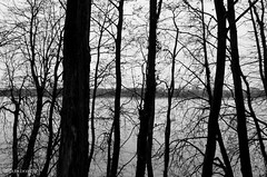 Late Autumn Loop Around The Lake. 9 (Oleh Zavadsky) Tags: leica bw lake nature monochrome blackwhite natur ukraine x galicia x2 xseries ternopil природа україна озеро galizien tarnopol галичина чорнобіле тернопіль монохром leicaimages leicax2 ternopilskaoblast leicax2gallery