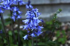 DSC_1137 (PeaTJay) Tags: flowers plants macro nature gardens fauna outdoors reading flora sigma micro closeups berkshire lowerearley nikond750