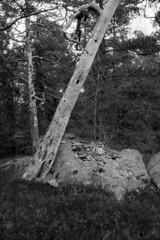 2016-April-23th_Porkkala_Yashica-Electro_055 (Tatu Korhonen) Tags: finland kirkkonummi porkkala yashicaelectro35professional yashinondx1745mm