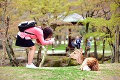Smile~ (Clonedbird  & Iris ) Tags: flower japan cherry spring nikon kyoto blossom deer   sakura nara       2016      d810