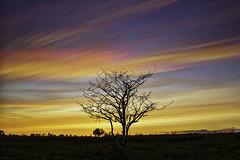 Hot Streak (Matt Molloy) Tags: sunset sky ontario canada motion tree field lines clouds landscape photography timelapse movement bath branches colourful streaks lovelife photostack mattmolloy timestack