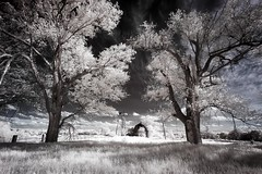 Old Barn Infrared II (Notley) Tags: trees sky field clouds barn rural landscape ir farm pasture missouri infrared april bucolic 2016 10thavenue notley ruralphotography lifepixel infraredconversion notleyhawkins coopercountymissouri missouriphotography httpwwwnotleyhawkinscom notleyhawkinsphotography windsorplacemissouri