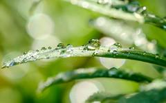 Envie de fraicheur (christophe.laigle) Tags: macro green fuji pluie vert freshness feuille gouttes fraicheur xpro2 platinumheartaward