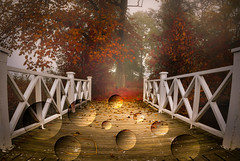 Surreal autumn (bjrn_c) Tags: autumn red orange tree fall dark evening leaf jetty surreal bubbles