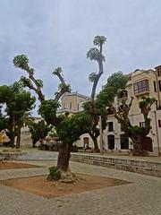 Branques (Bricheno) Tags: espaa holiday spain espanha mediterranean espana mallorca palma spanien spagna spanje majorca baleares  espanya  balearics hiszpania   bricheno