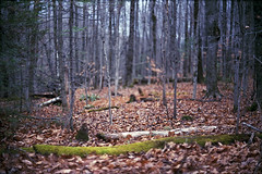 Untitled (Armin Schuhmann) Tags: auto wood old trees canada color film nature leaves analog forest 35mm vintage lens landscape outdoors prime leaf haze woods focus fuji natural quebec superia f14 uv scan foliage mc automn negative 55mm filter bark 400 m42 trunk pelicula serene normal analogue manual filme fujica st705 400asa argentique filmscan estrie chinon planar analogic xtra selfdeveloped screwmount c41 filmphotography 2015 unicolor shootfilm filmphoto filmisnotdead heliopan analogo
