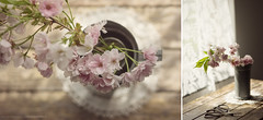 (CarolienCadoni..) Tags: pink light stilllife sun photography still diptych soft shadows dof blossom bokeh pastel 50mmf14 sal50f14 sonyslta99