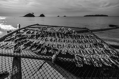 Fish drying in Nacpan Beach, El Nido, Palawan (julesnene) Tags: travel fish beach southeastasia philippines culture ph fishingvillage comfortfood elnido sundried driedfish sunbaked bestbeach twinbeach daing fishdrying bulad julesnene mimaropa juliasumangil nacpan nacpanbeach canon7dmarkii canon7dmark2 calitangbeach pinikas tuy