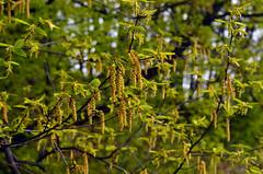 Spring (ChemiQ81) Tags: spring poland polska polish polen polonia jaro pologne wiosna 2016  polsko  puola plland lenkija pollando   poola poljska polija pholainn     chemiq polanya lengyelorszgban