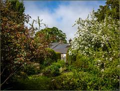 An English Country Garden (Hector Patrick) Tags: phoenix northyorkshire rosedale twop rosedaleabbey flickrelite scenicsnotjustlandscapes britnatparks fujifilmx70