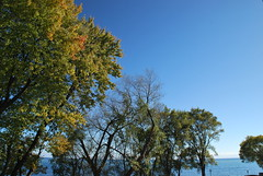 fall_311 (Sascha G Photography) Tags: autumn trees toronto color tree fall leaves leaf nikon seasons waterfront lakeshore indiansummer d60