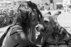 No se necesitan palabras (lvaro Carrera Photo) Tags: bw cceres mascotas