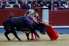 Posada de Maravillas, San Isidro 2016 (Fotomondeo) Tags: espaa spain bull bullfighter toros bullfight toro bullring matador torero plazadetoros corridadetoros lasventas posadademaravillas fujifilmxm1