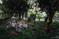 Bosque Niebla-42-Editar-2.jpg (javiercollado) Tags: espaa paisaje andalucia algeciras 2016 estrechodegibraltar natraleza