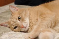 DSC_0270 (Cropshy) Tags: 50mmf14 cat