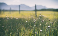 A lovely day (Tracey Rennie) Tags: summer mountains grass fence rockies alberta chives goldenhour waterton wildchives