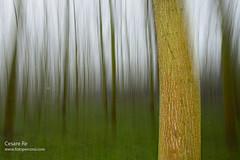 Pioppeto di Cesare Re (Cesare Re) Tags: verde alberi flash piemonte albero piedmont d800 pioppo vegetazione pioppeto parcodelticino corsodifotografia nikkor247028 nikond800 cesarere cesarerecorsodifotografia cesarereworkshopdifotografia cesarerefotografoeautore effettone