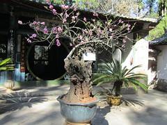 IMG_2702.JPG (Willem vdh) Tags: china asia yunnan tonghai 2011