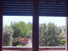 what i see when i was in sea (demech) Tags: trees italy window flat eraclea