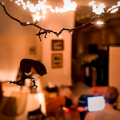 [72/365] March 12, 2012 (zacharymandrews) Tags: silhouettes christmaslights dangling parachute backofmyhead shinyscale hangonbuddy 365theboyandthegirl