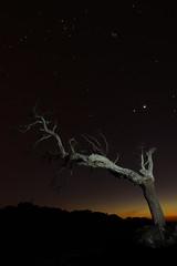 El paso del tiempo (kico250) Tags: longexposure naturaleza tree nature night stars arbol noche venus estrellas nocturna jupiter universe extremadura franciscodecordoba caceres universo plasencia largaexposicion sonyalpha pico250 kico250