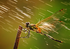 under the pouring rain (shikhei) Tags: specialpicture buzznbugz physis
