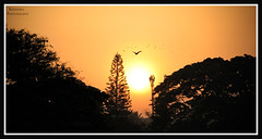 Good Morning Friends !! (Kanishka **) Tags: sunset sun india lake tree bird sunrise bangalore karnataka samrat kanishka ulsoor canon550d