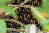 IMG_6929L4 (Sharad Medhavi) Tags: bees canonef100400mmf4556lisusm canoneod50d canonef100400mmf4556lisusmwith14xiiiextender birdsandbeesoflakeshorehomes