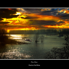 flood on the Rhine (Explore, Frontpage) (Peter Roder) Tags: trees shadow sun lake reflection nature water birds clouds boot see sonnenuntergang sundown flood wolken loveit rhine sonne sonnenaufgang gewitter reflektion unwetter