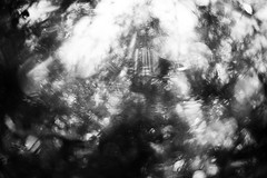 Lost In The Woods (belleshaw) Tags: trees sky blackandwhite blur nature bokeh needles simpsonpark 50mmf18 hemetca outoffocusonpurpose