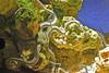 Green Brittle Star (Pat L.314) Tags: aquarium sealife echinoderm invertebrate brittlestar coth oklahomaaquarium jenksaquarium greenbrittlestar blinkagain