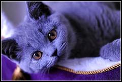 Kitty (lollipoplollipop@home) Tags: