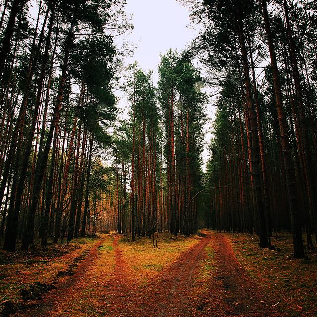 Senzig Woods