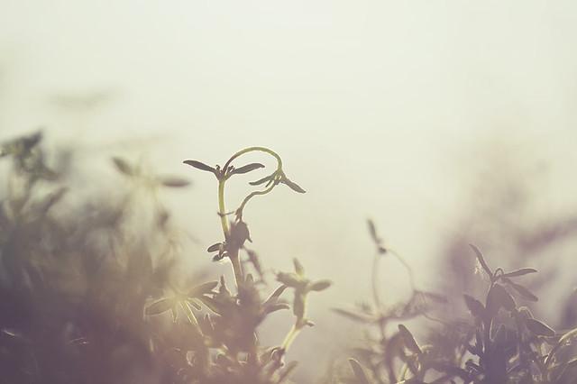 Evening perfume (2) (Explore #311, 02.03.2012)