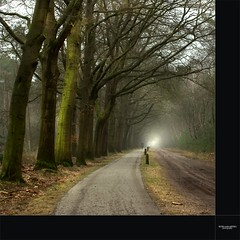 getting closer (Zino2009 (bob van den berg)) Tags: road trees cold holland forest training dark landscape grey nevel bomen cyclist nebel foggy mountainbike nederland fast atmosphere boom biker lonely workout quick bos midday somber wald sober overijssel mistig eenzaam fietser holterberg snel zandpad bobvandenberg photoshopcreativo zino2009