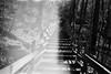 traces of those who were (Stephen Poullas) Tags: walking with im feel like always ghosts cuyahogafalls bwfilm gorgetrail i pentaxp3n kodakprofessional400trix