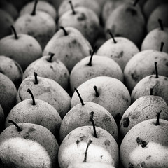 asian pears (catlucia) Tags: fruit pears asianpears alienskin shinli