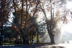 amanhecer no Luberon (miriam.faleiros) Tags: trees nikon frança provence arvores luberon amanhecer outono raiosdesol cidadelas