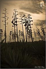 Se esconde el sol (Art.Mary) Tags: espaa naturaleza nature canon contraluz andaluca spain espagne almera cabodegata genoveses pitas flickraward