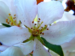 Spring Cherry Blossom (Stanley Zimny (Thank You for 11 Million views)) Tags: park flowers macro nature colors cherry botanical flora seasons blossom fourseasons naturephotos natureimages