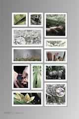 7avril 2012 en pot (Magikphil) Tags: poster photo nikon suisse avril 2012 vd montes d7000 magicphil magikphil montesphilippe magicphilch